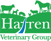 Hafren Veterinary Group